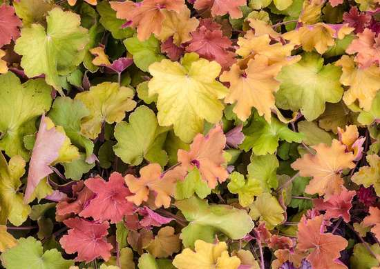 Low Maintenance Ground Covers The Best Ones For Your Yard