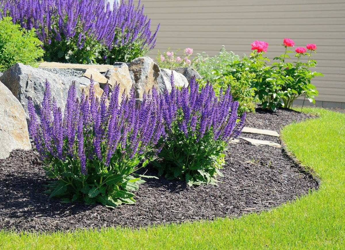 how to get free plants for your garden bob vila