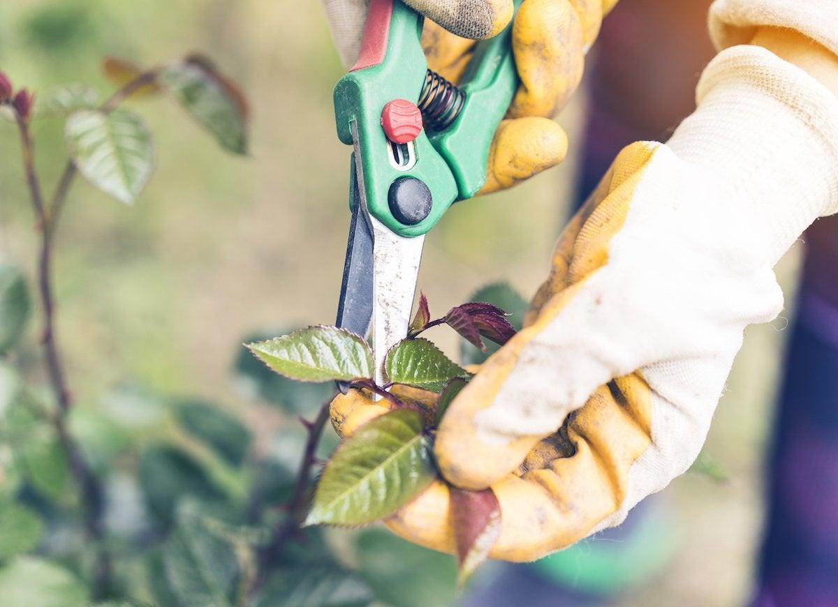 Propogate cuttings