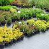 Free Plants from Nursery
