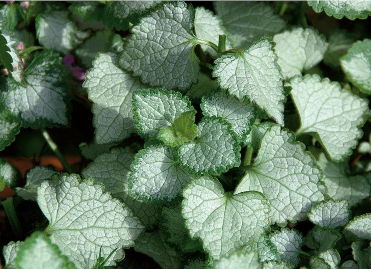 Low Maintenance Ground Covers The Best Ones For Your Yard Bob Vila