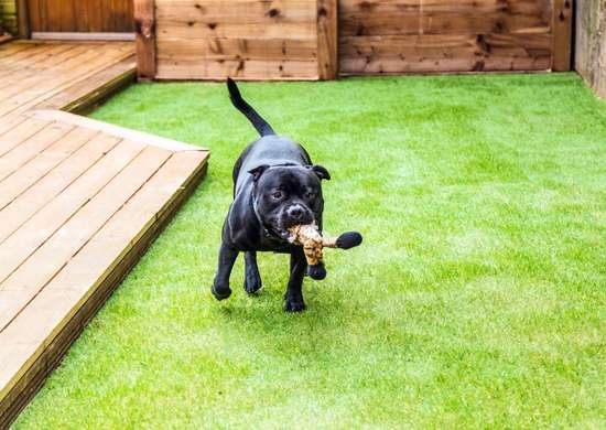 Install Artificial Grass for Pets