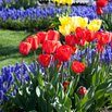 Plant Bulbs to Color Your Yard