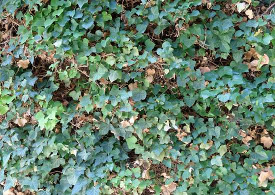 Plant Ground Covers on a Slope