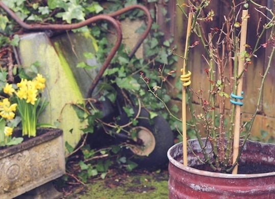 Diy plant supports with sugru