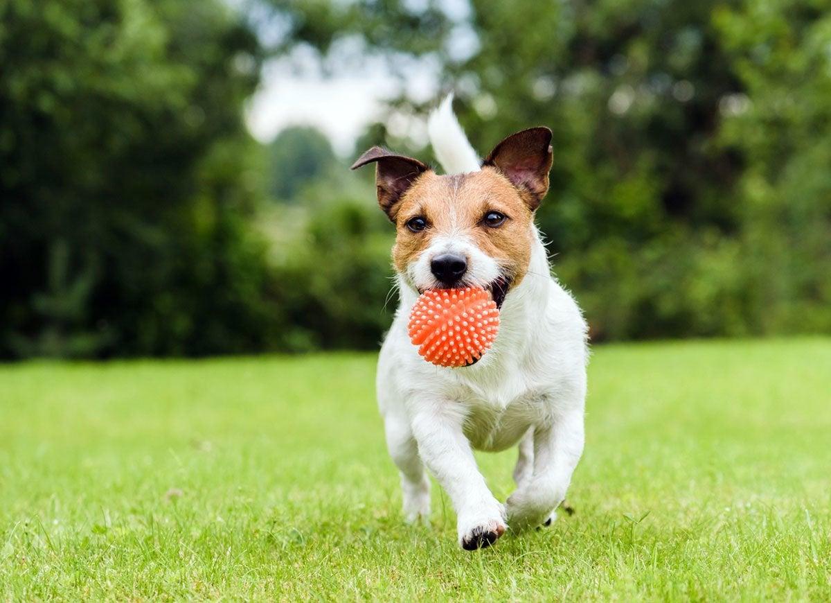 Insurance dog bite