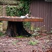 Tree Stump Wood Table