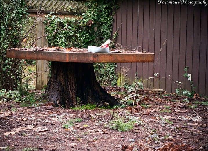 Tree Stump Wood Table