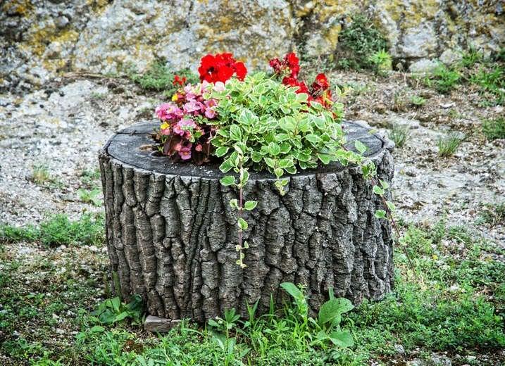 Tree Stump Flower Bed
