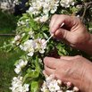 How to Pollinate Flowers