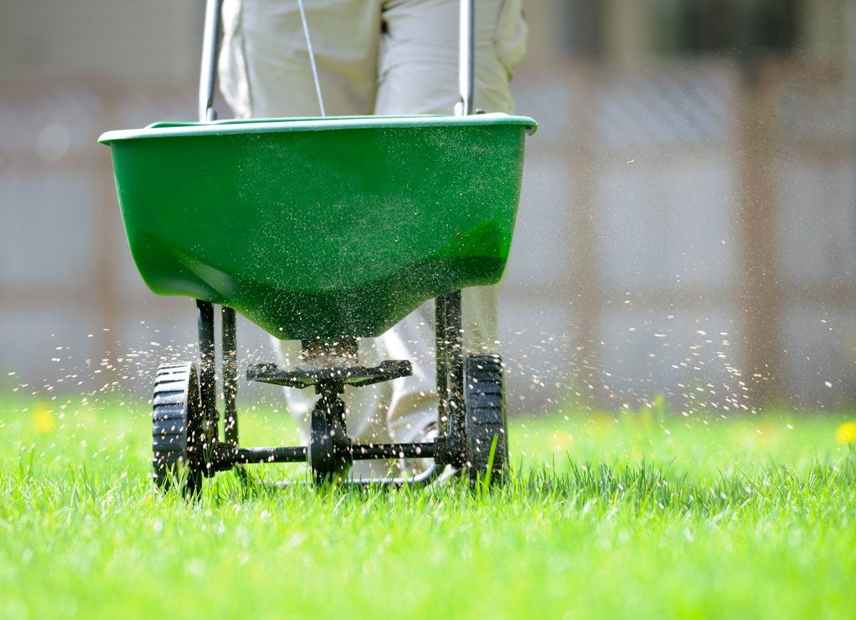 how to choose the best fertilizer for lawn