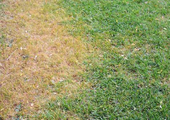 How to Reseed the Lawn