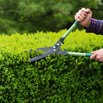 Best Time to Trim Shrubs