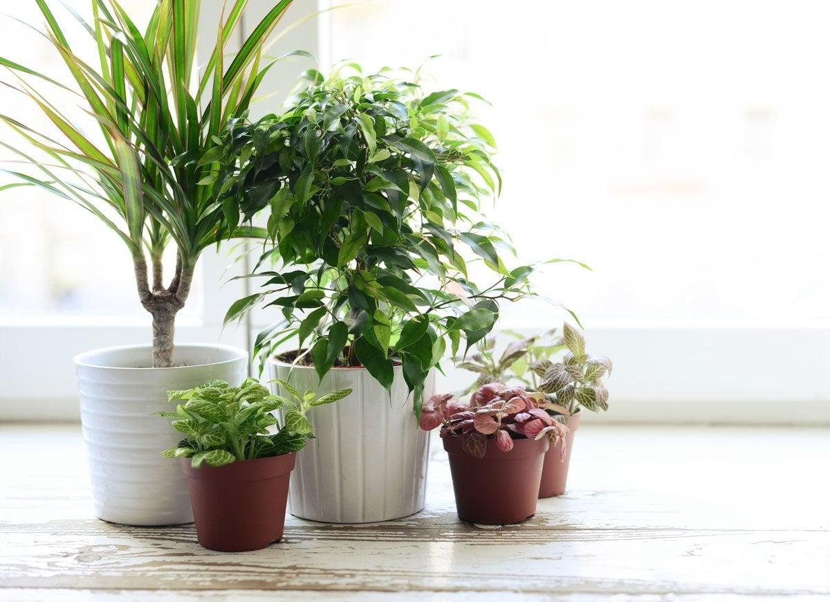 Bugs plants