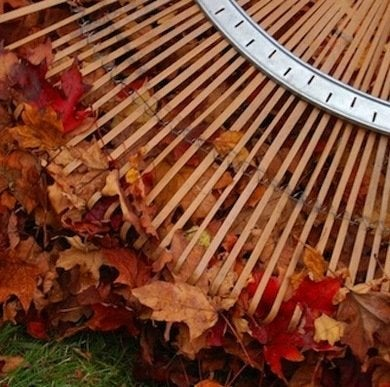 Believejay.blogspot-leaf-rake