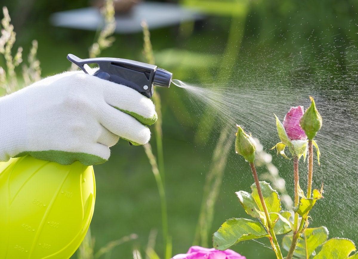 Plant spray