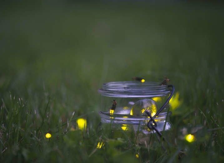 Fireflies bad luck