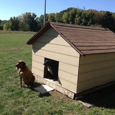 Doghouse3