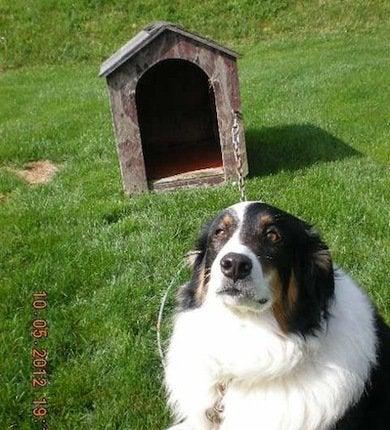 Doghouse6