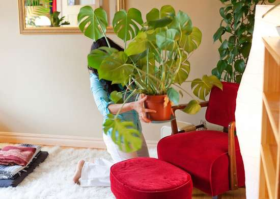 Signs of Shock in Houseplant