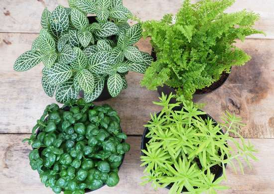 How to Choose a Houseplant