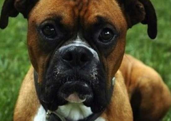 Uniteddogs.com dog