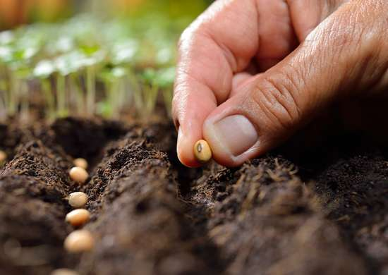 Protect Seeds with Silica Gel Packets