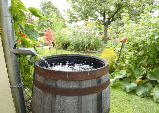 Free rain barrel