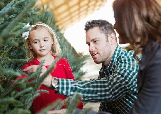 Fresh Christmas Tree