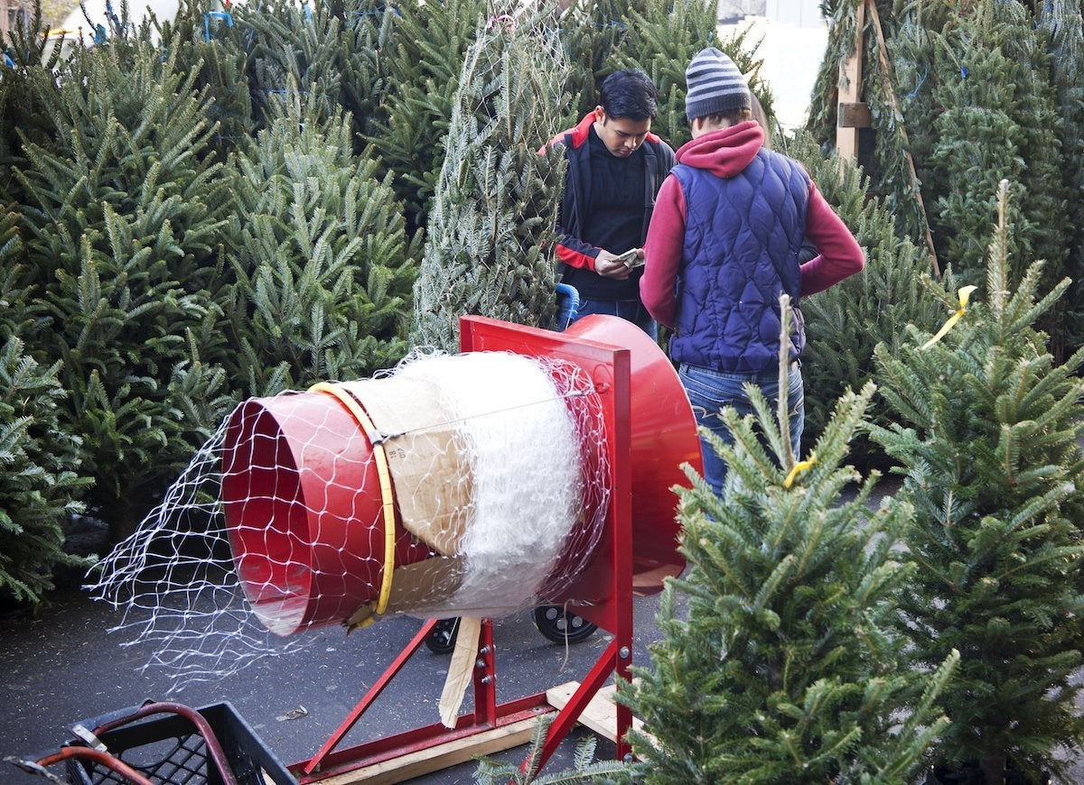 Buying christmas tree