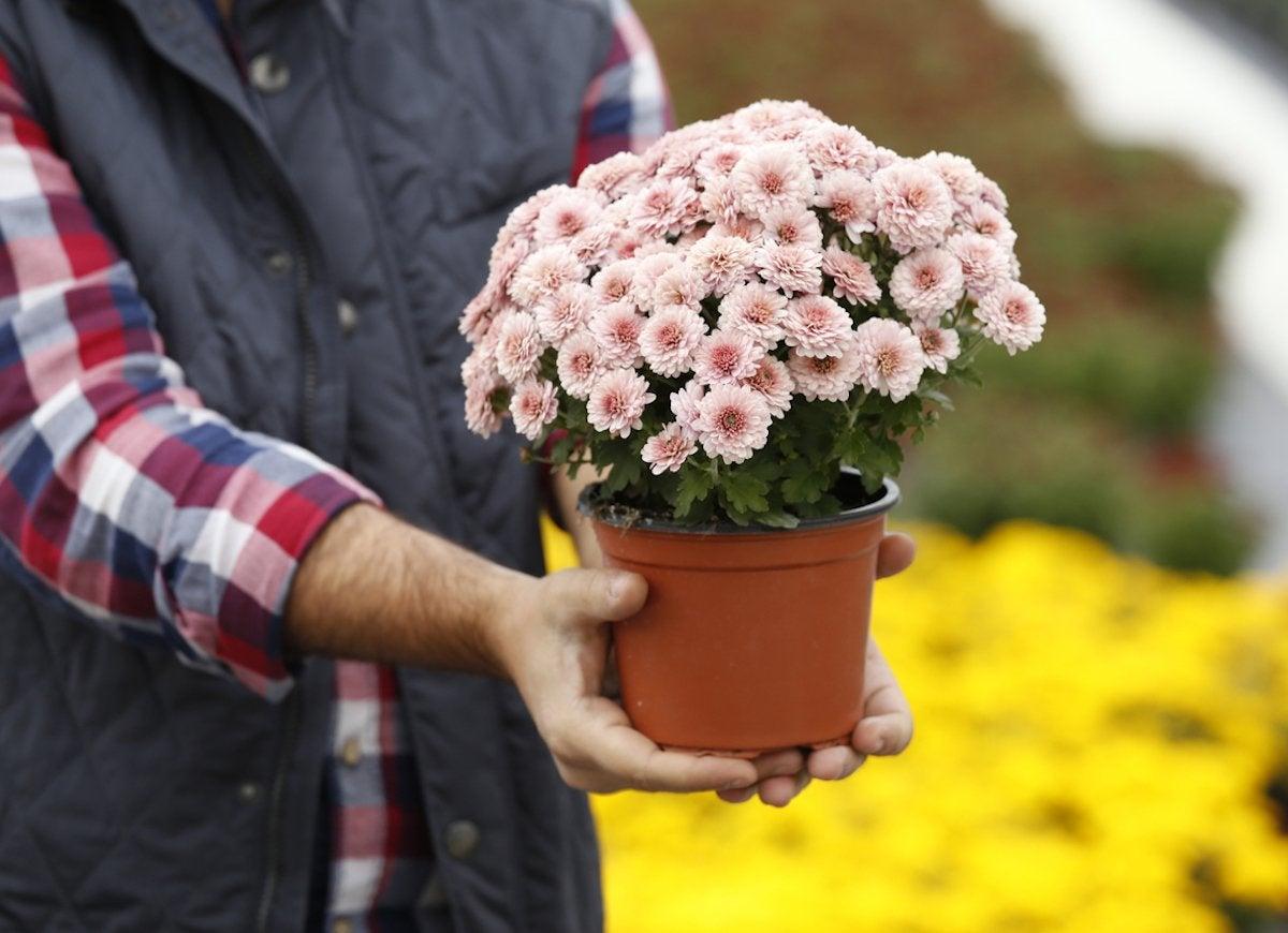 7 Houseplants with Secret Health Benefits