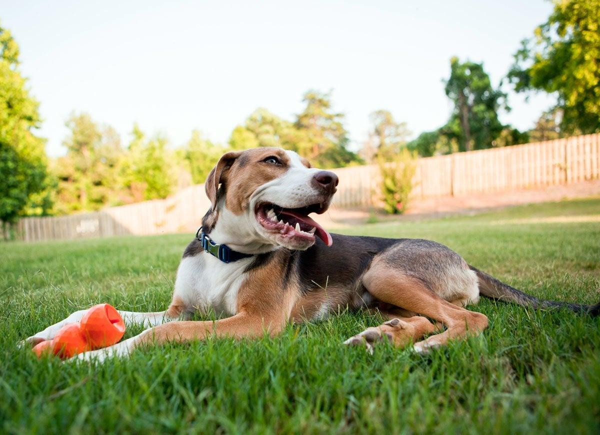 Lawsuit dog