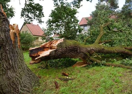 Lawsuit from Fallen Trees