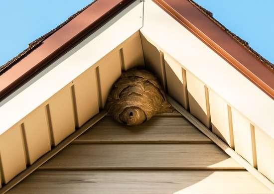 Should I Hire Pest Control?
