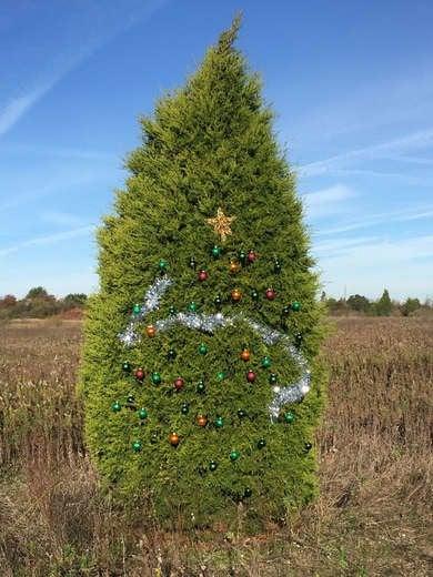 Christmas Tree Looks Sparse