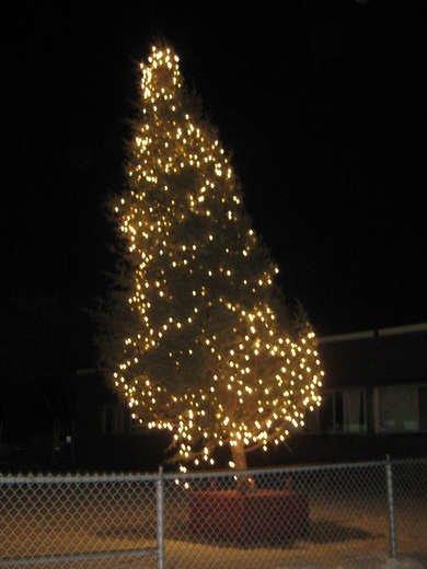 Tilted Christmas Tree