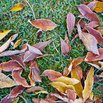 Remove Leaves from Winter Lawn