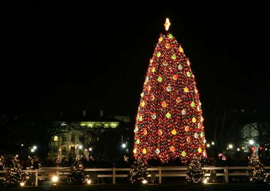 The National Christmas Tree in Washington, D.C.