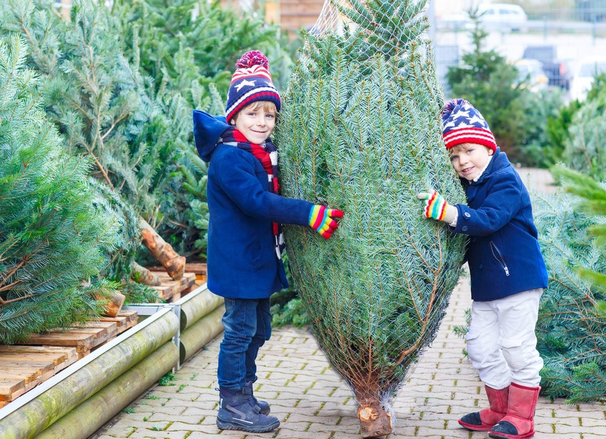 Christmas tree price
