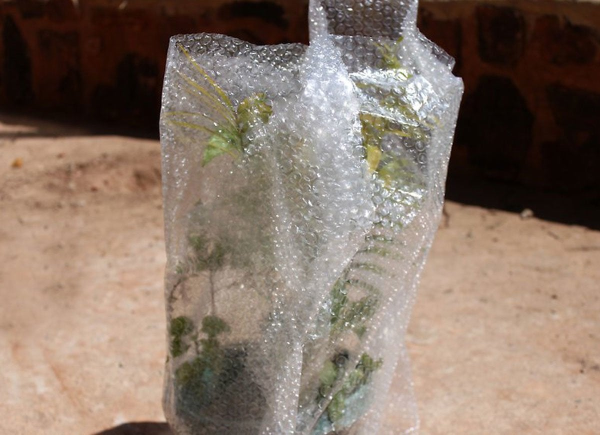 Bubble wrap plants