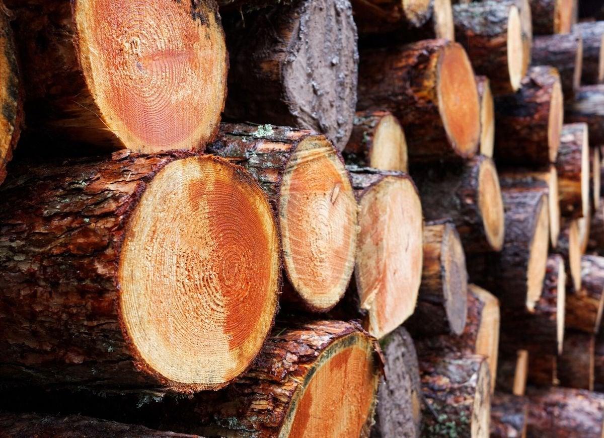 Burning wet wood