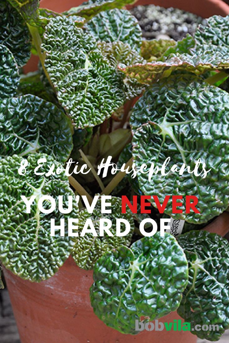 8 exotic houseplants youve never heard of
