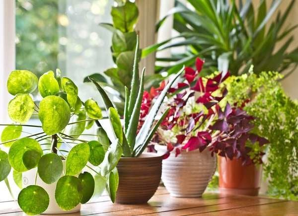 Mold In Potted Plants