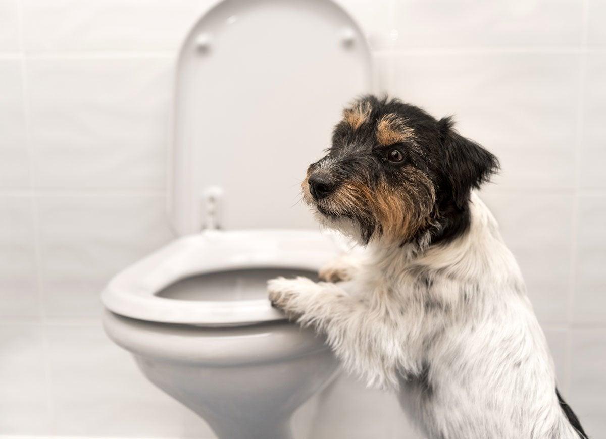 Pets toilet