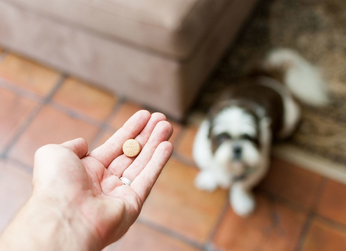 20 Pet Safety Tips for the Home - Bob Vila