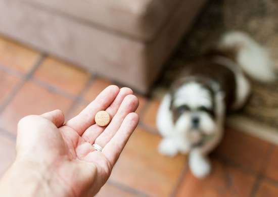 Can I Give My Pet Human Medications?