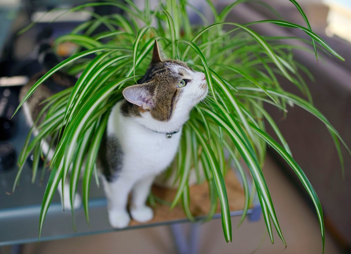 Pets plants