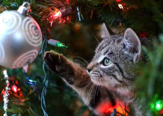 Can Holiday Decorations Harm Pets?
