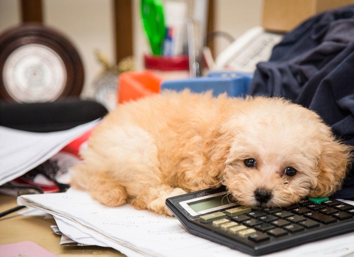 Pets office supplies
