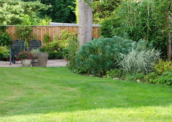 How to Groom Shrubs and Trees